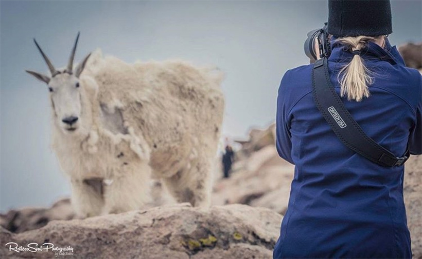 Utility Strap on girl taking photo of a mountain goat